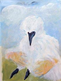 turkey vulture rescue